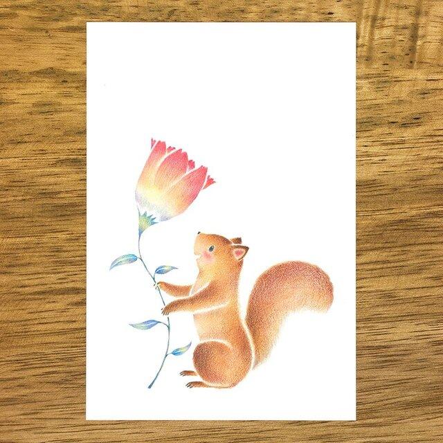 """4枚セット。絵本のような。ポストカード """"リスのテテとお花"""" PC-334の画像1枚目"""