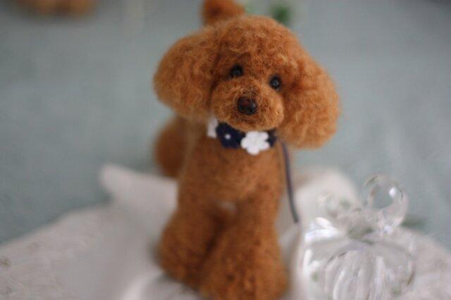 羊毛フェルト お洒落でしょう レッドカラーのトイプードルの画像1枚目