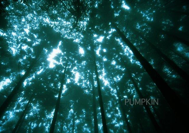 霧の森-No3  PH-A4-067   御蔵島 スダジイ 椎の木 森 雨 霧 杉  の画像1枚目