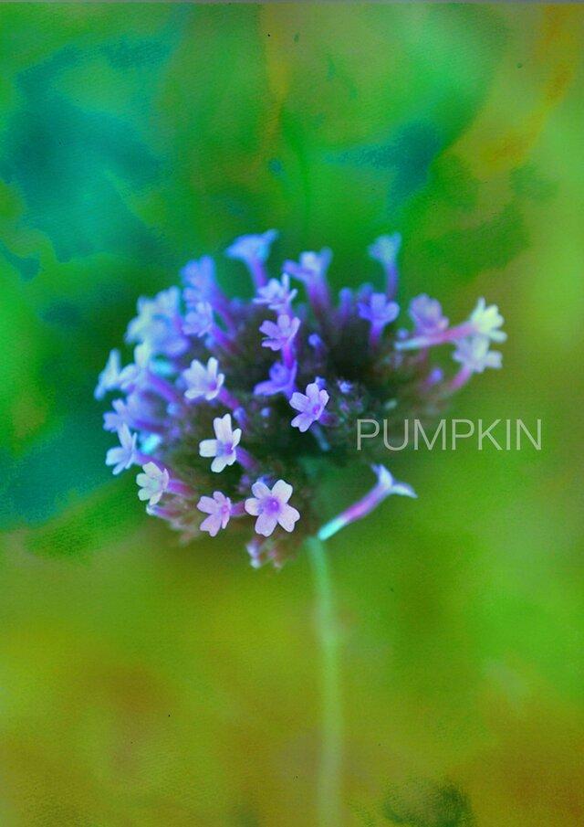 うれい PR-A4-032      写真画  イラスト 花 雨上がり 紫 パープルの画像1枚目