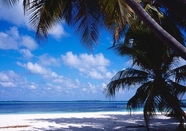 椰子の木の木陰 PH-A4-0101 写真 モルディブ 椰子の木  碧い海 海 オーシャン 砂漠 浅瀬 渚の画像1枚目