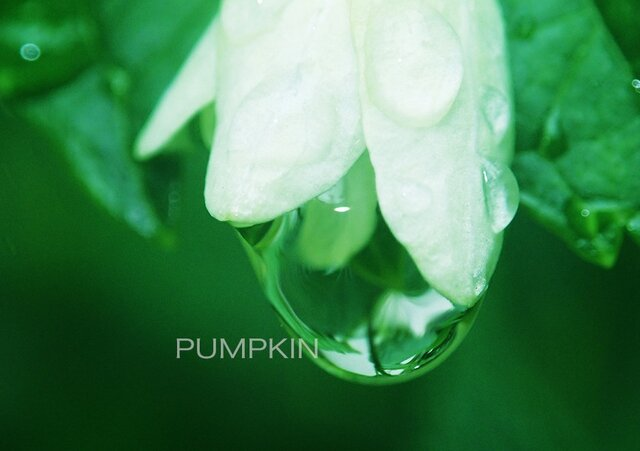 しずく-No5  PH-A4-0103  写真 雫 雨 水滴 雨粒 小雨 光 水の玉の画像1枚目