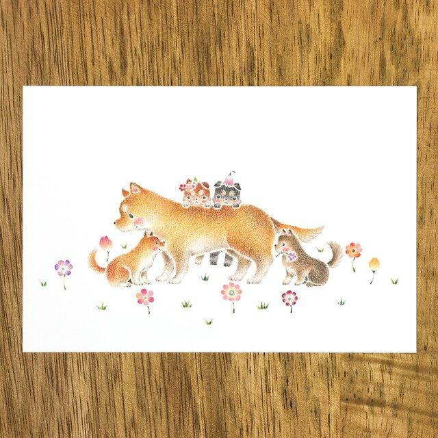 """4枚セット。絵本のような。ポストカード """"花咲く原っぱの親犬と子犬"""" PC-325の画像1枚目"""