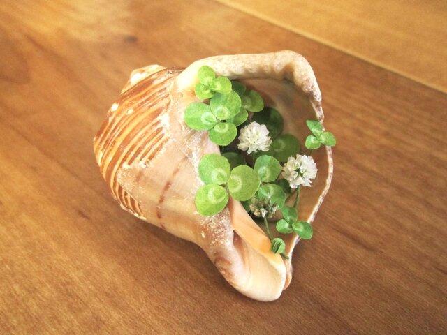 貝がら ミニチュア Green シロツメクサ SSの画像1枚目