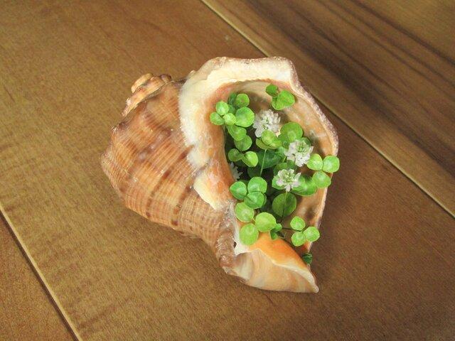 貝がら ミニチュア Green シロツメクサ Lの画像1枚目