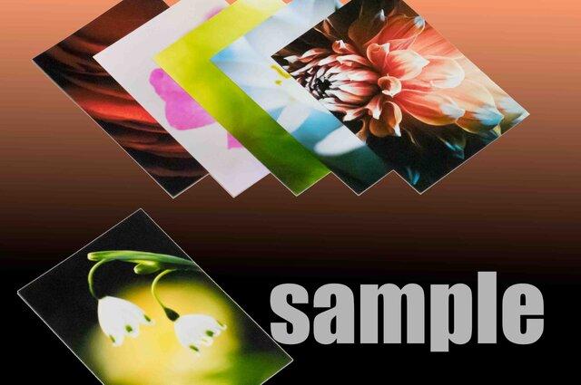 6枚 1セット【900円 送料無料】  草花のアート写真  ポストカードサイズの画像1枚目