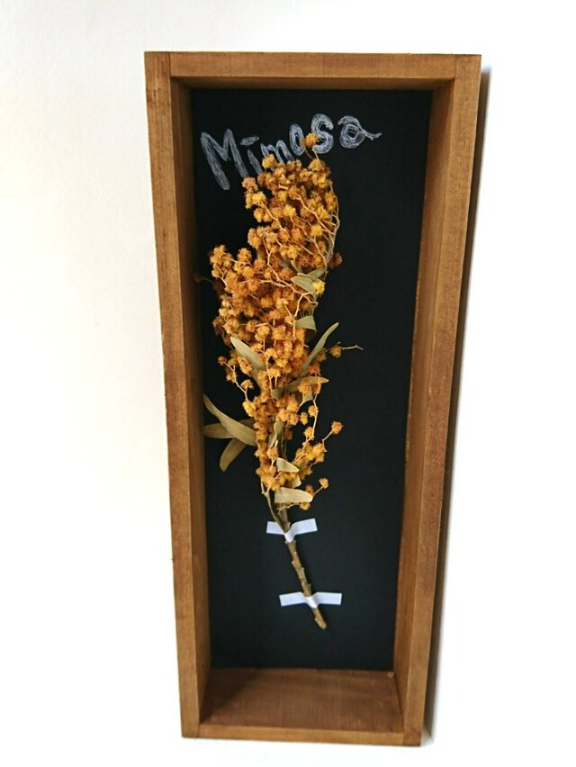 植物標本 ボックス ドライフラワー (ミモザversion.)の画像1枚目