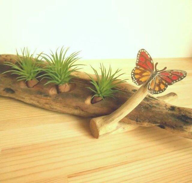 【温泉流木】ステンドグラス風のチョウがとまるグリーンスタンド エアープランツスタンド 流木インテリアの画像1枚目