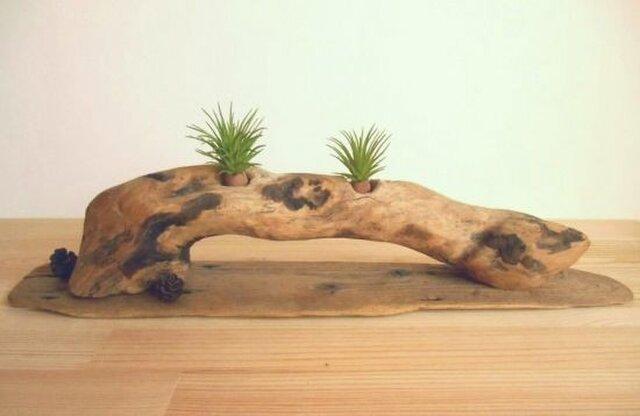 【温泉流木】味のある変形流木にミニ松ぼっくりがかわいいグリーンスタンド エアープランツスタンド 流木インテリアの画像1枚目