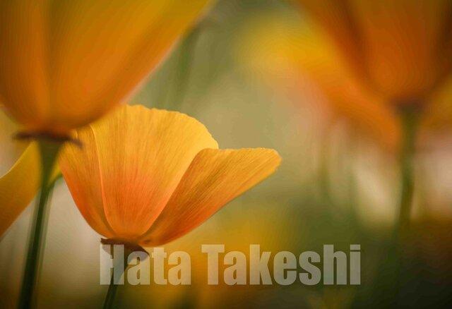 【A-14】A-4サイズ 3枚 1セット 1800円【送料無料】草花のアート写真の画像1枚目