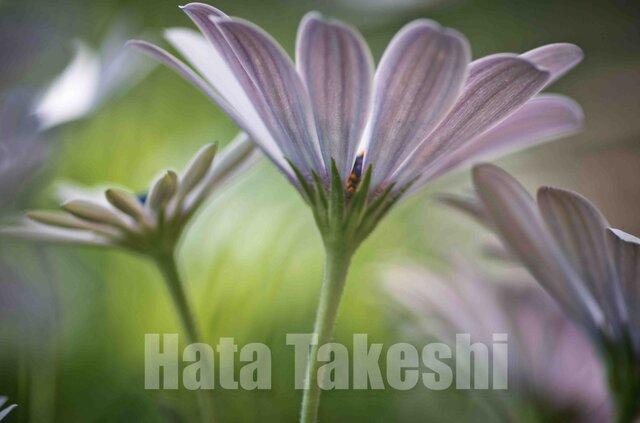 【A-16】A-4サイズ 3枚 1セット 1800円【送料無料】草花のアート写真の画像1枚目