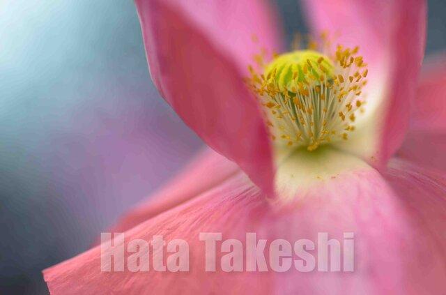 【A-21】A-4サイズ 3枚 1セット 1800円【送料無料】草花のアート写真の画像1枚目