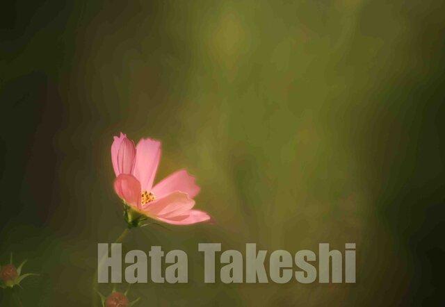【A-33】A-4サイズ 3枚 1セット 1800円【送料無料】草花のアート写真の画像1枚目