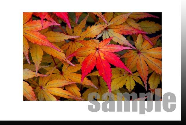 【P-14】ポストカード5枚【750円送料無料】秋冬シリーズ  の画像1枚目