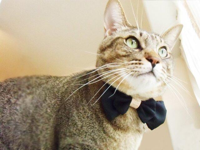 【送料無料】名入れオーダー・ヌメ革がアクセントな猫の首輪の画像1枚目