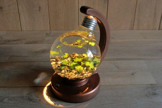 bulb terrarium ball [warm]の画像1枚目