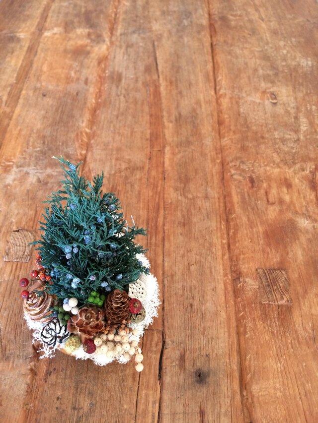 再販 Christmas forest  (ジュニパー)の画像1枚目