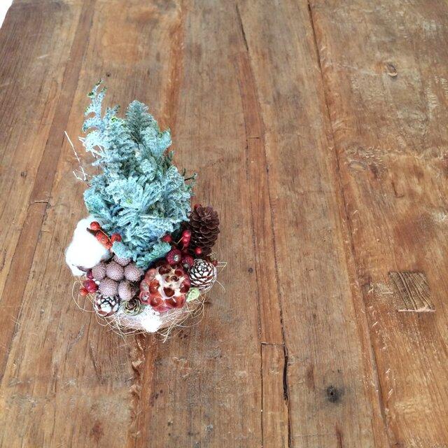 Christmas forest  (ヒムロスギsnow)の画像1枚目