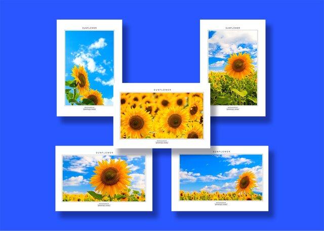 「ひまわり」ポストカード5枚組の画像1枚目