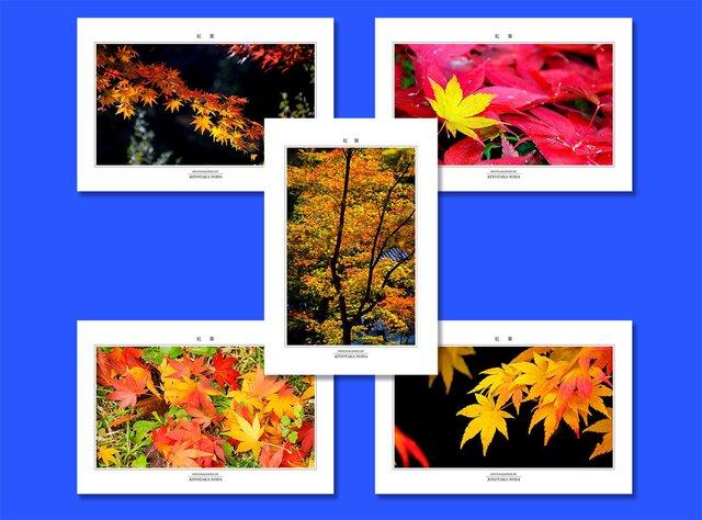 「紅葉」ポストカード5枚組の画像1枚目