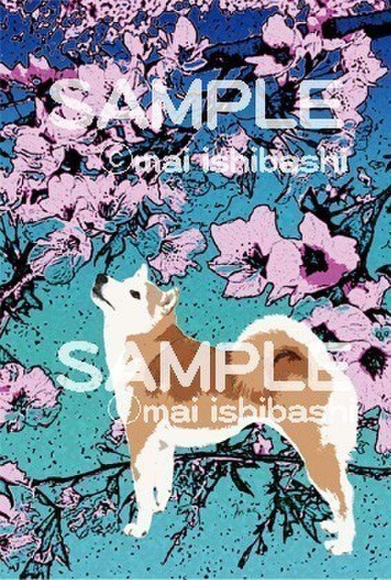 オリジナルイラストポストカード/柴犬と桜/同柄2枚組の画像1枚目