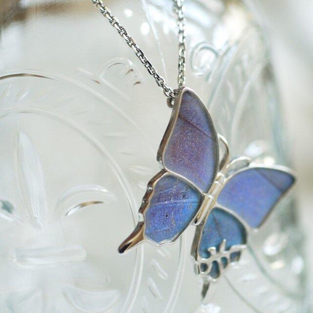 モルフォ蝶の大きなペンダント(ななめ)Silverの画像1枚目