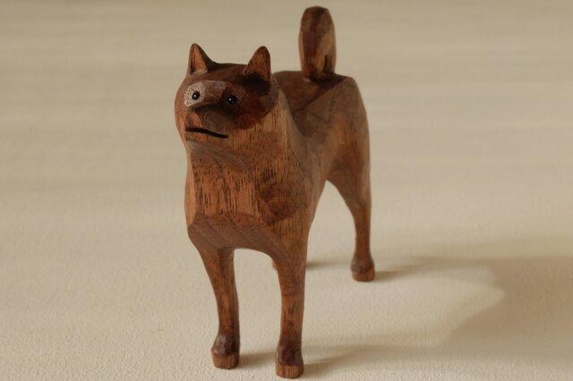 柴犬 ウォールナットの画像1枚目
