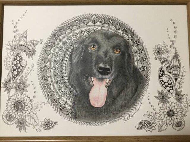 原画 肉筆 一点もの ボールペンアート フラットコーテッドレトリバー  額装付き 百貨店作家 ボールペン画 絵画 犬の絵の画像1枚目