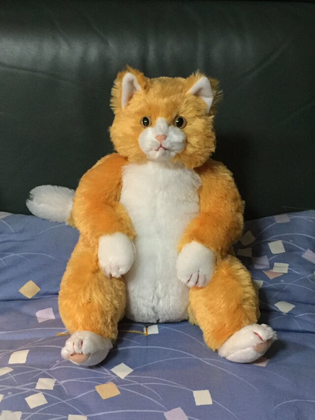 座り猫の画像1枚目