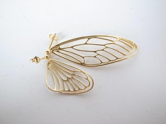cicada / GPの画像1枚目