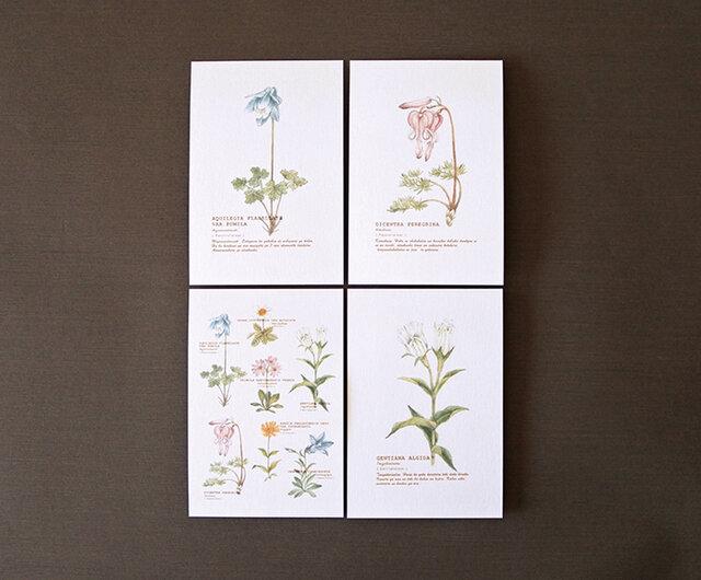 高山植物のポストカード4種セットの画像1枚目