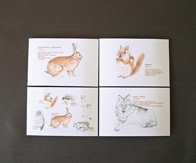 森のどうぶつたちのポストカード4種セットの画像1枚目