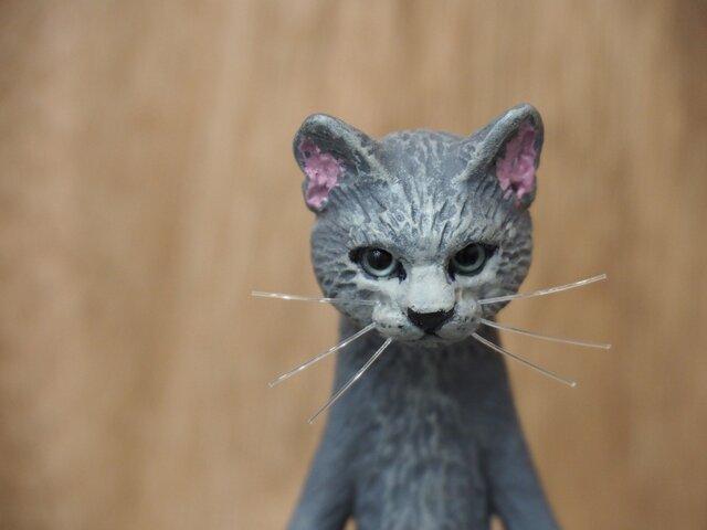 The Cat 【ロシアンブルー】の画像1枚目