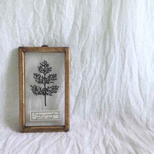 【植物標本シリーズ】オルラヤの幼葉の切り絵フレームの画像1枚目