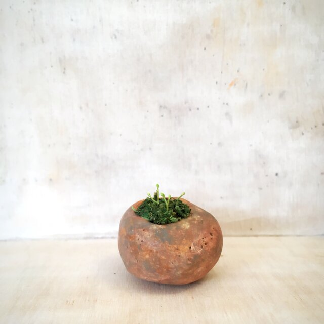 1958.bud 粘土の鉢植えの画像1枚目