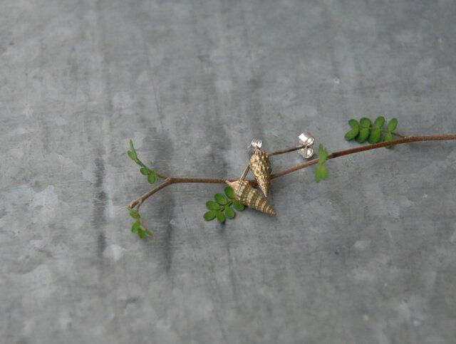 小さな巻貝のピアス 真鍮の画像1枚目