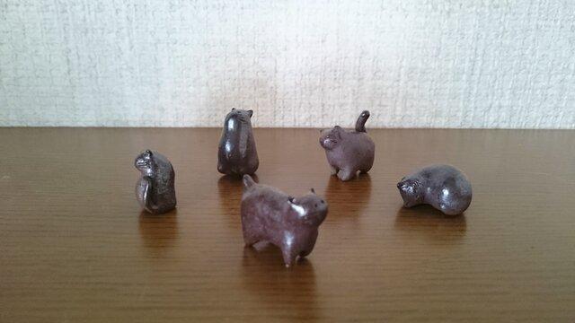 5匹の仲よし豆猫たちの画像1枚目