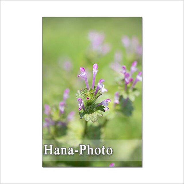 1308) 小さな野の花たち 2    ポストカード5枚組の画像1枚目