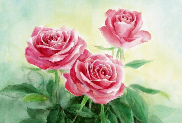 ☆ポストカード3枚セット☆101「Roses」☆の画像1枚目