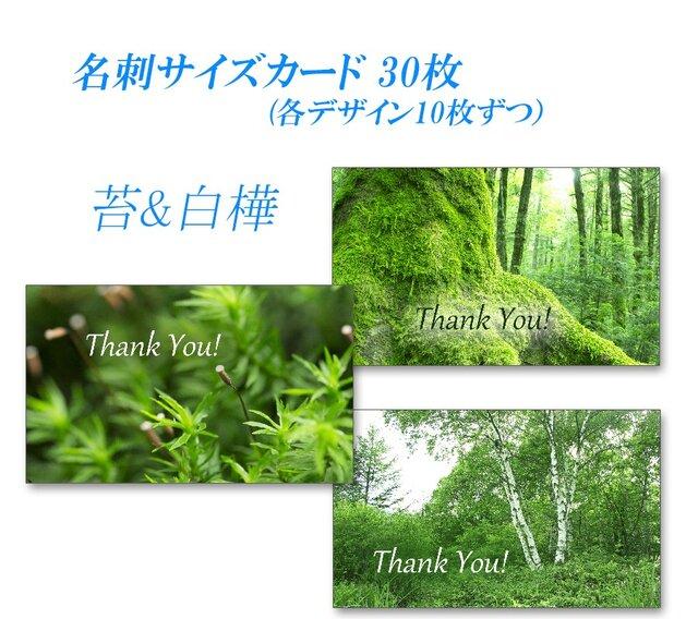 緑! 苔&白樺   名刺サイズサンキューカード   30枚の画像1枚目