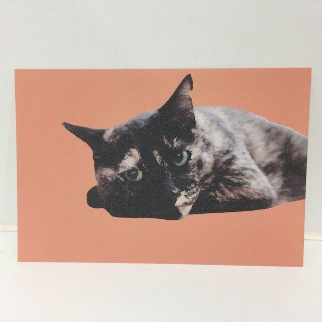 ねそべるサビ猫ポストカードの画像1枚目