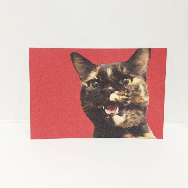 しゃべるサビ猫ポストカードの画像1枚目