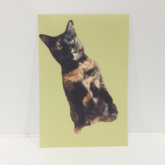 スタンディングサビ猫ポストカードの画像1枚目