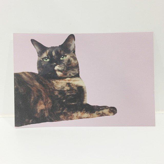 あっちを向くサビ猫ポストカードの画像1枚目