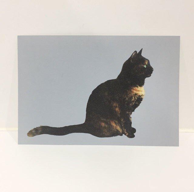 横をむくサビ猫ポストカードの画像1枚目