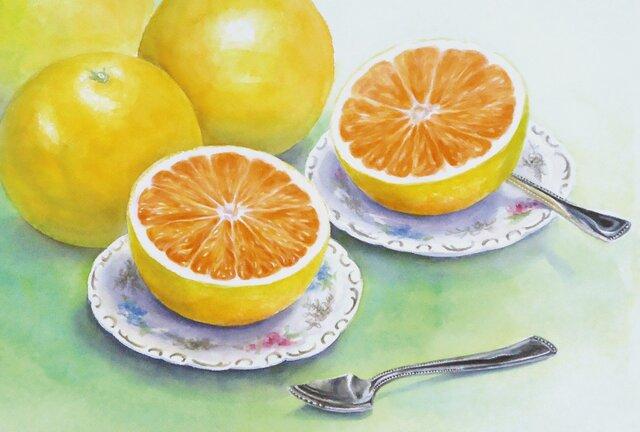 ☆ポストカード3枚セット☆203「グレープフルーツ」☆の画像1枚目
