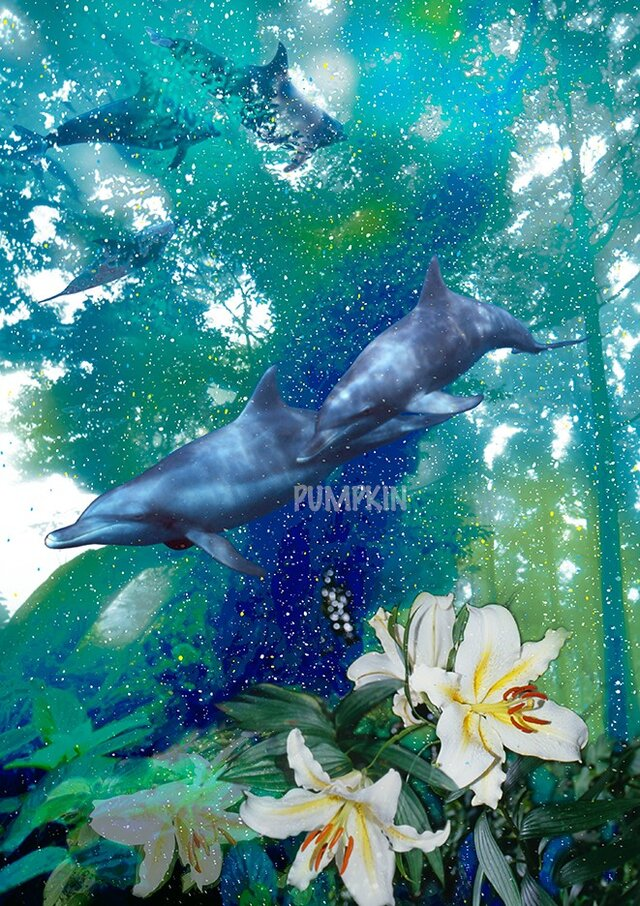 イルカの森-1 PR--A4-036 写真画 イルカ 森 巨樹 大木 島の画像1枚目