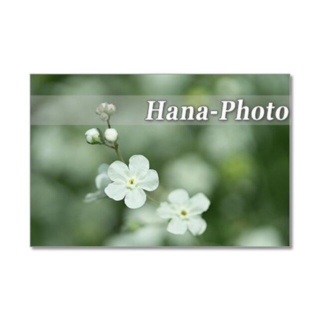 1322) 白い花(勿忘草、クレマチス、オルレア、バラなど) ポストカード5枚組の画像1枚目