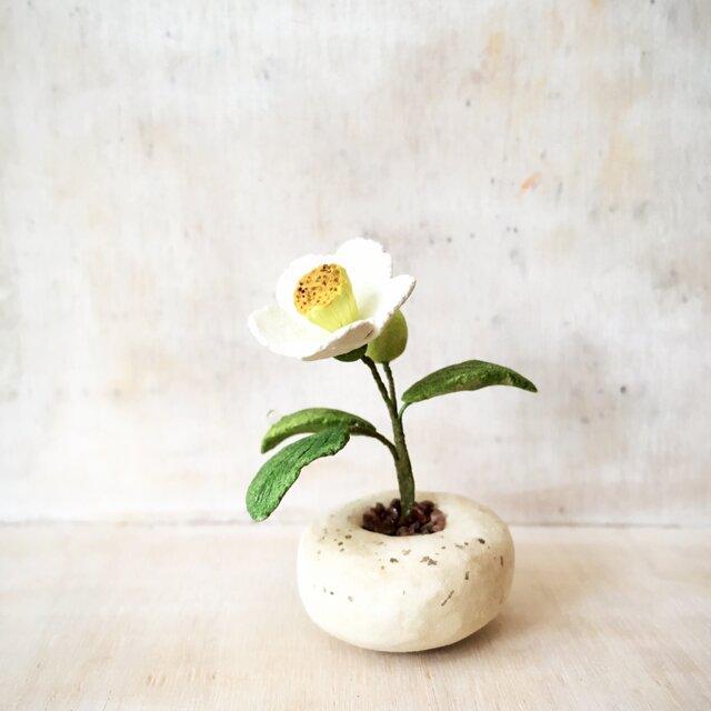 2101.[SOLD]bud 粘土の鉢植え ナツツバキの画像1枚目