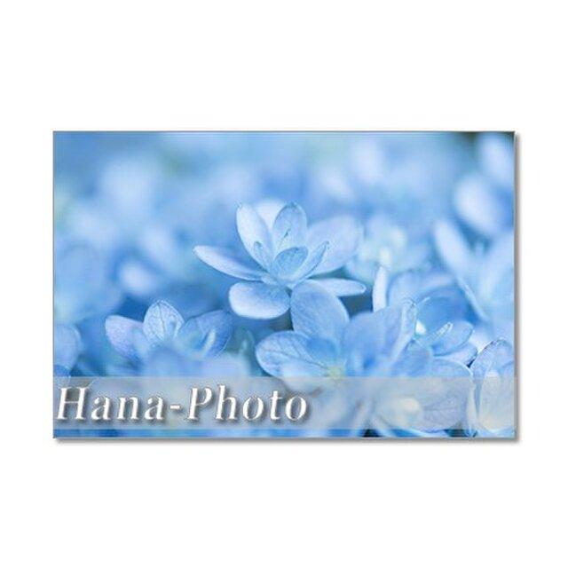 1329)  美しいブルーの紫陽花  ポストカード5枚組の画像1枚目